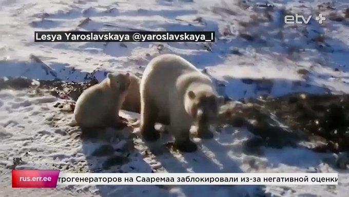 российском Фото