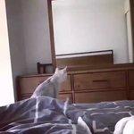 鏡に映ったものが自分の耳だった!と分かった時の猫の反応が可愛すぎる!