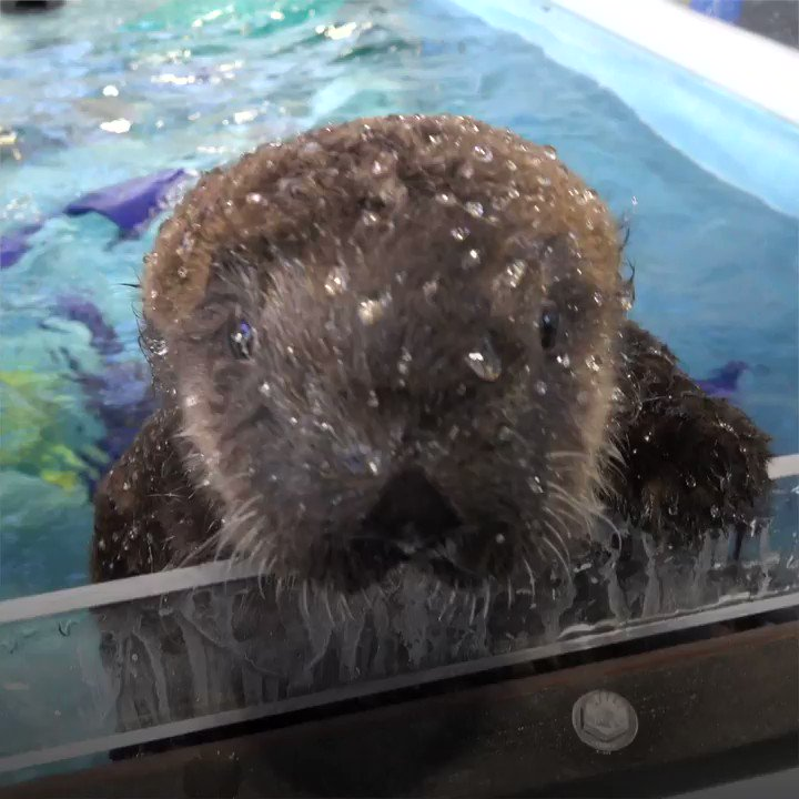 Today we salute Lincoln, President of sea pups. His cuteness is unimpeachable.  #PresidentsDay