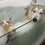 気持ちよさそうにお風呂に入ってるよ~!かわいい猫と犬