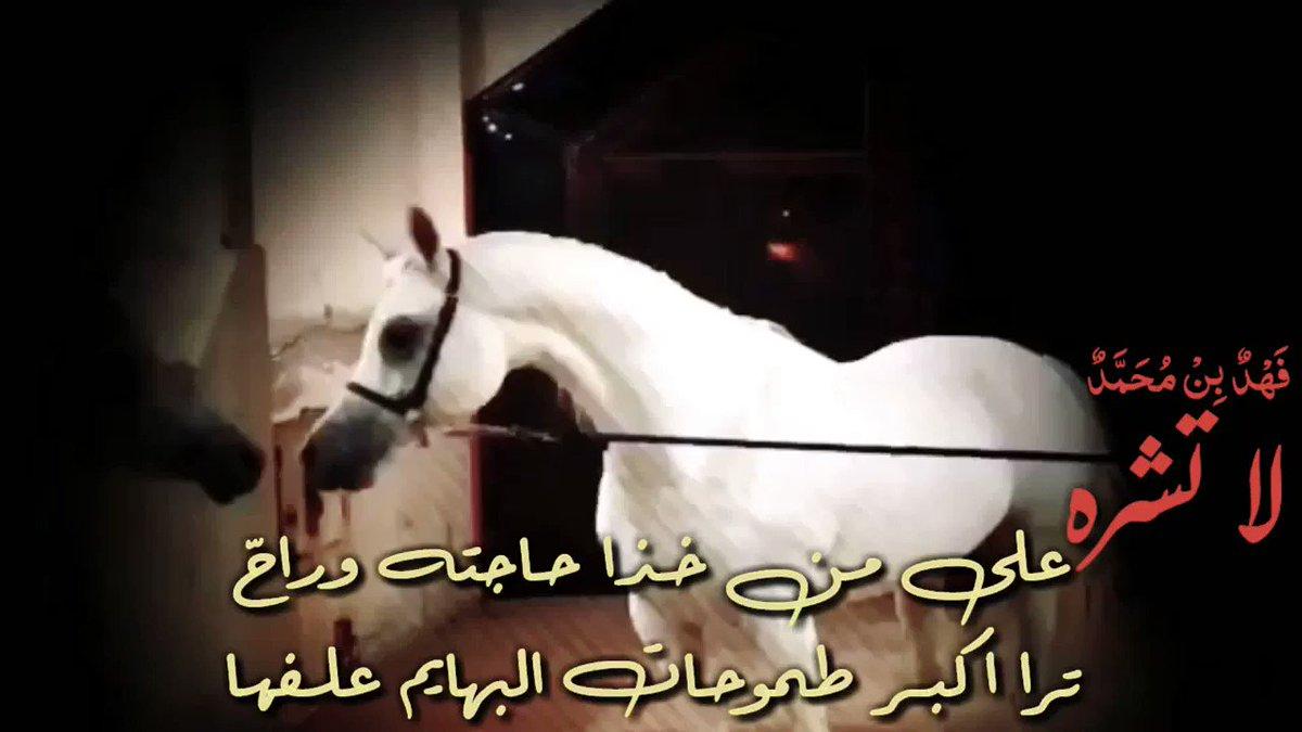 لاتشره على شخص(ن) خذا حاجته وراح   ترى أقصى طموحات (البهايم ) علفها ..!!