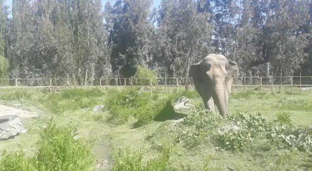 Global Elephants's photo on #charitytuesday