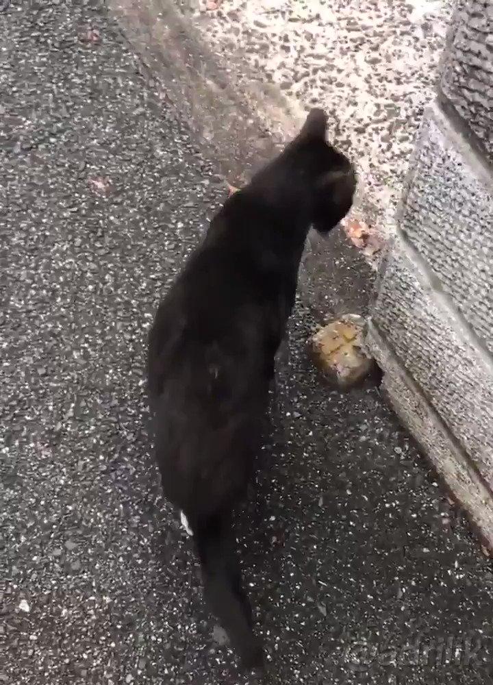 que mal genio tiene este gato oye