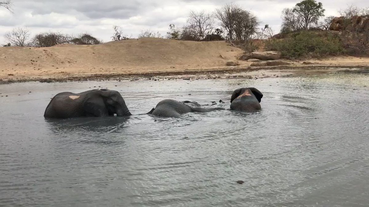 The Ithumba orphans treat the mud bath as their own personal swimming pool! Your donations ensure that during the dry season, its kept fully topped up so that wild animals can continue to drink their fill or enjoy a dip