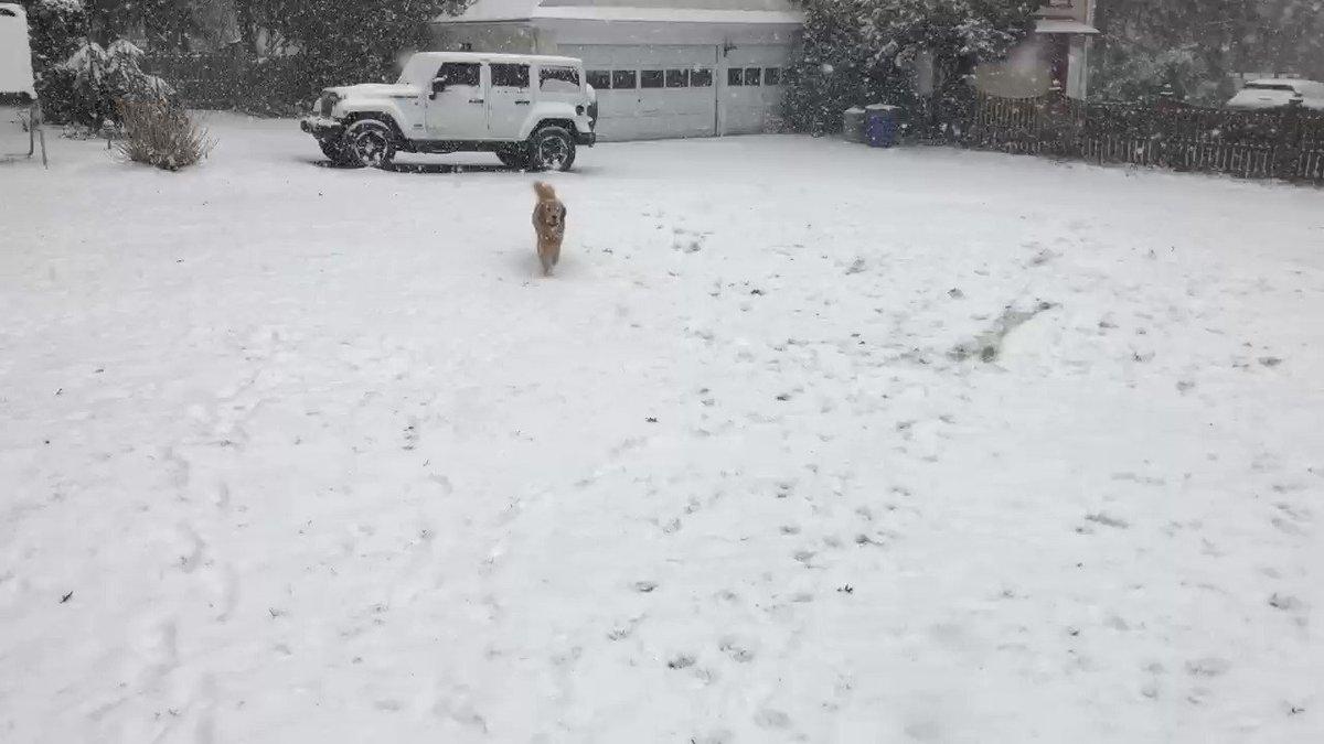 Dawn Timmeney's photo on Snow Day