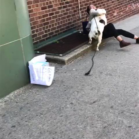 the most important video of the week is @AOC being attacked by a constituent's dog