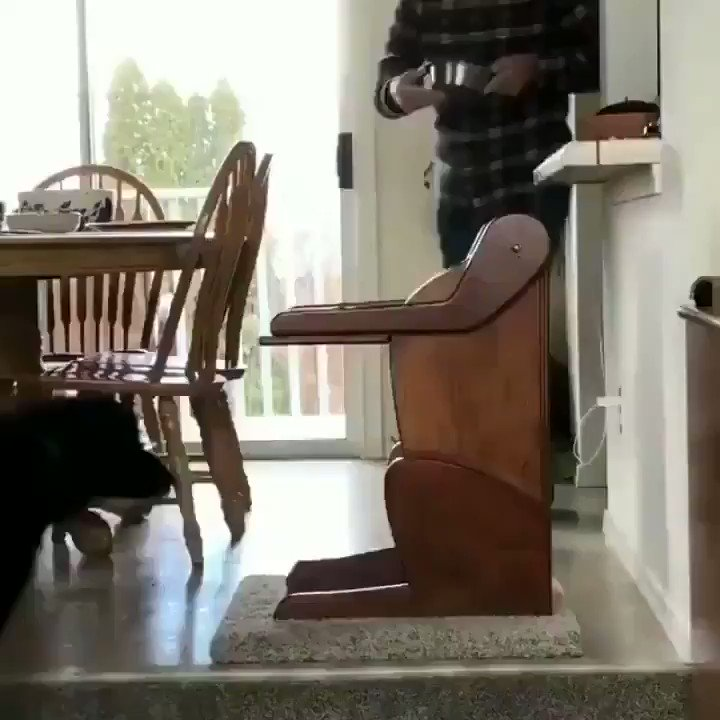this dog has a digestive issue so his family made him a chair so that he can actually eat 😭