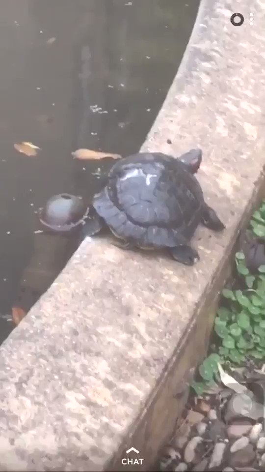 I was walking back from class this morning and decided to stop at the turtle pond to see some turts and brighten my day. When I walked home from the turtle pond, my day was even worse 😂