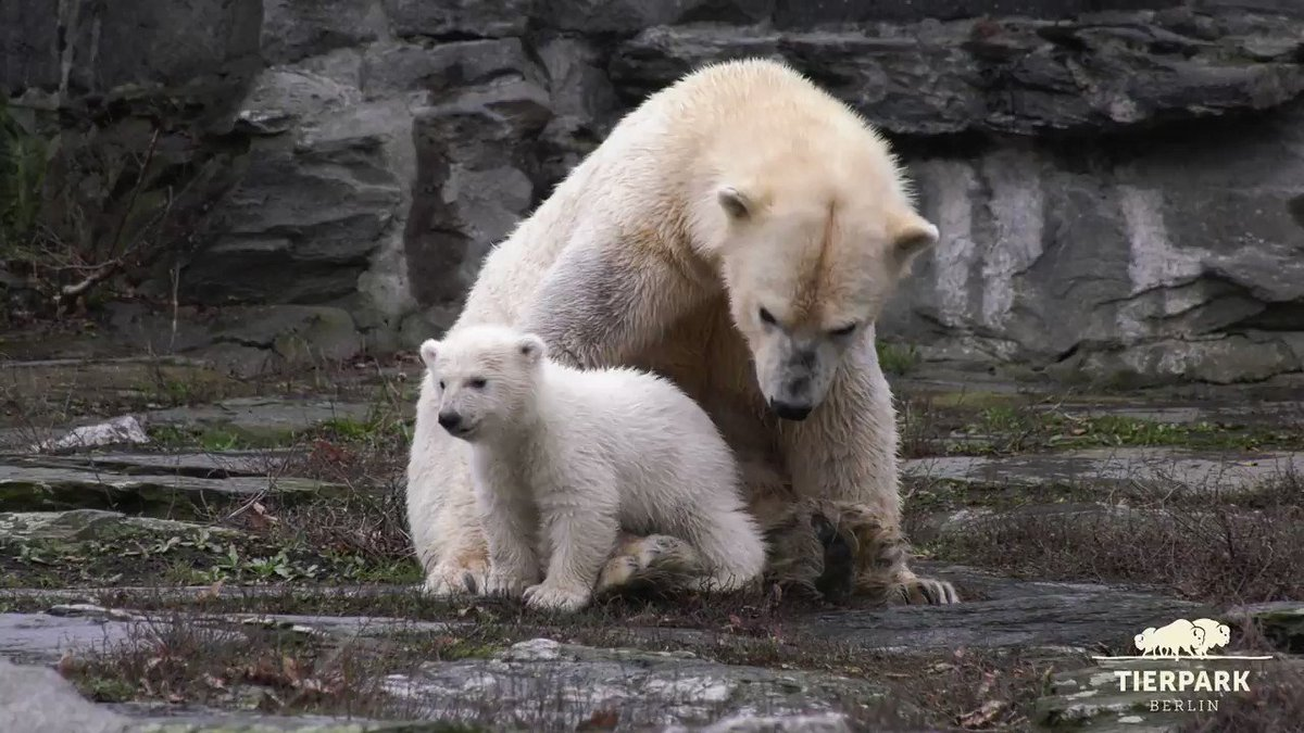 Zoo Tierpark Berlin's photo on #Eisbär