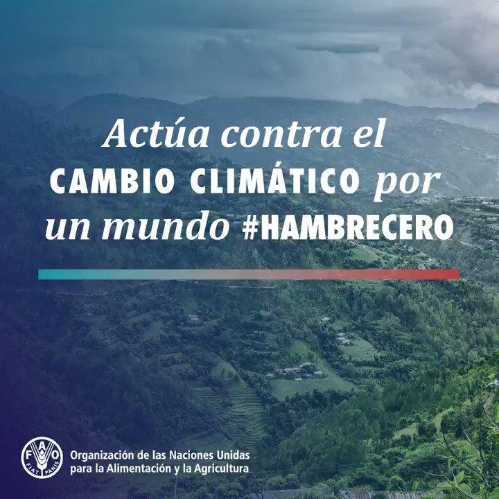 FAO en español's photo on #cambioclimático