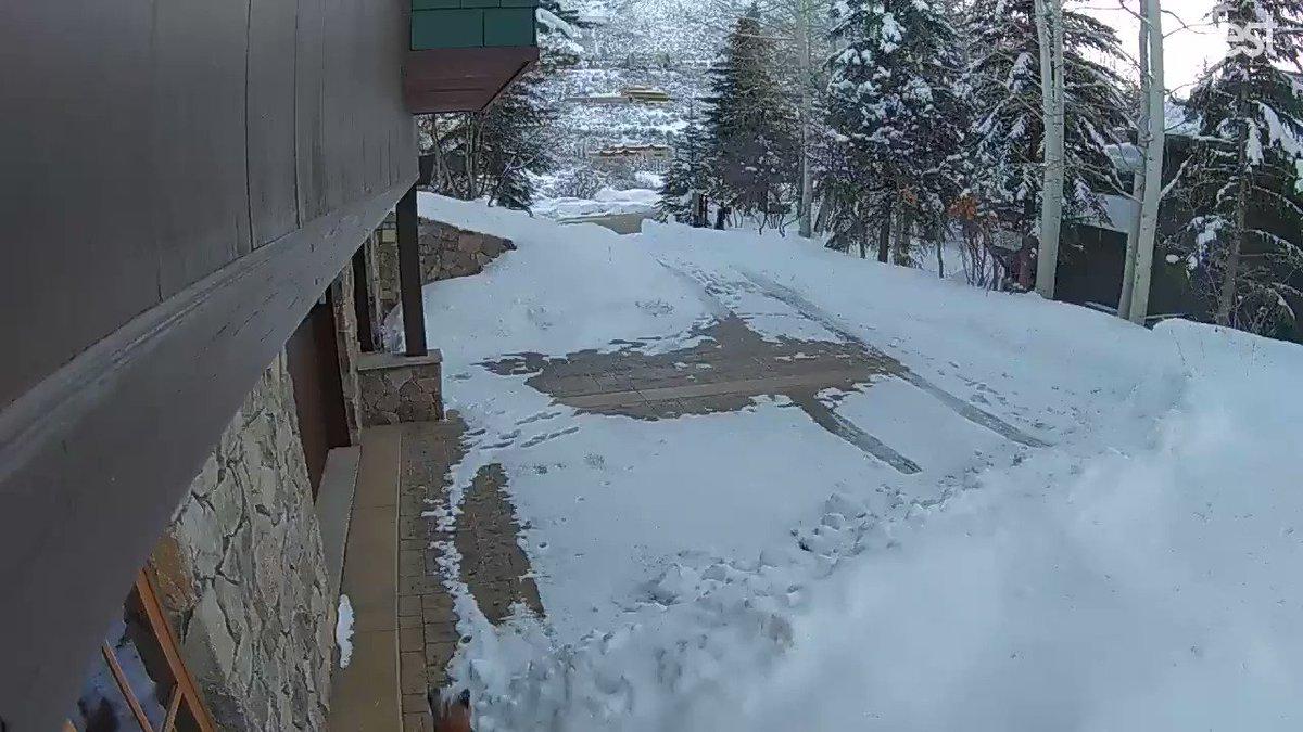 Danielle Gersh's photo on Aspen