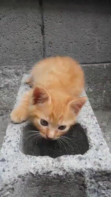 ブロックにすっぽりハマる猫が可愛すぎて