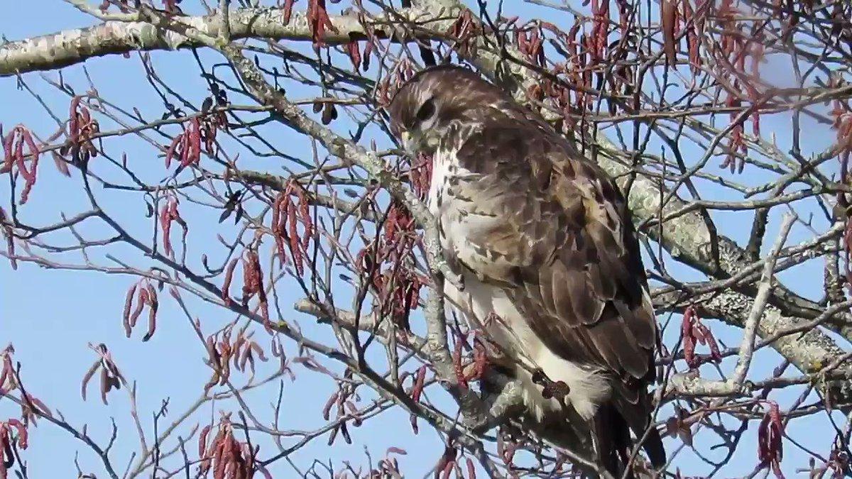 Pacificnorthwestkate's photo on #Hawks