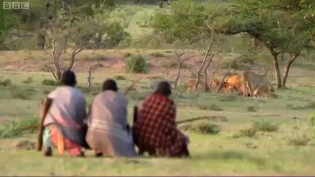 Kenyans are alpha af. One minute they are chasing a Cheetah till it gets exhausted, the next they are stealing meat from a pack of Lions.