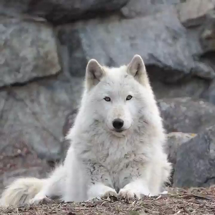 Wolf Conservation Center's photo on Howl