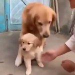 親が子を守るのは犬も同じ!母親犬の愛情を感じる!