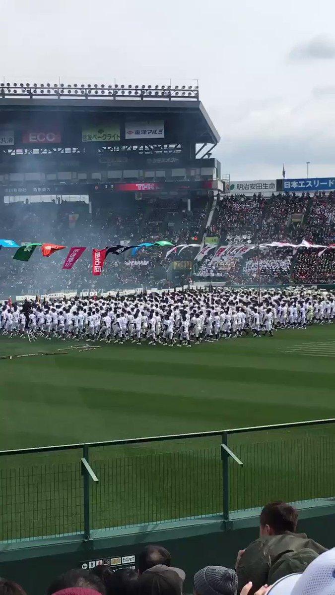 Hiyoko's photo on #選抜高校野球
