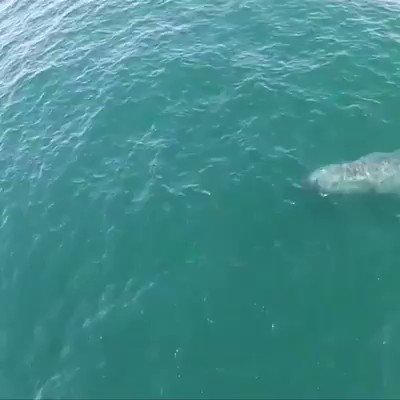 クジラが虹を作ってくれた🌈 こういう動画RTしたら何かいいことあるって😍😳