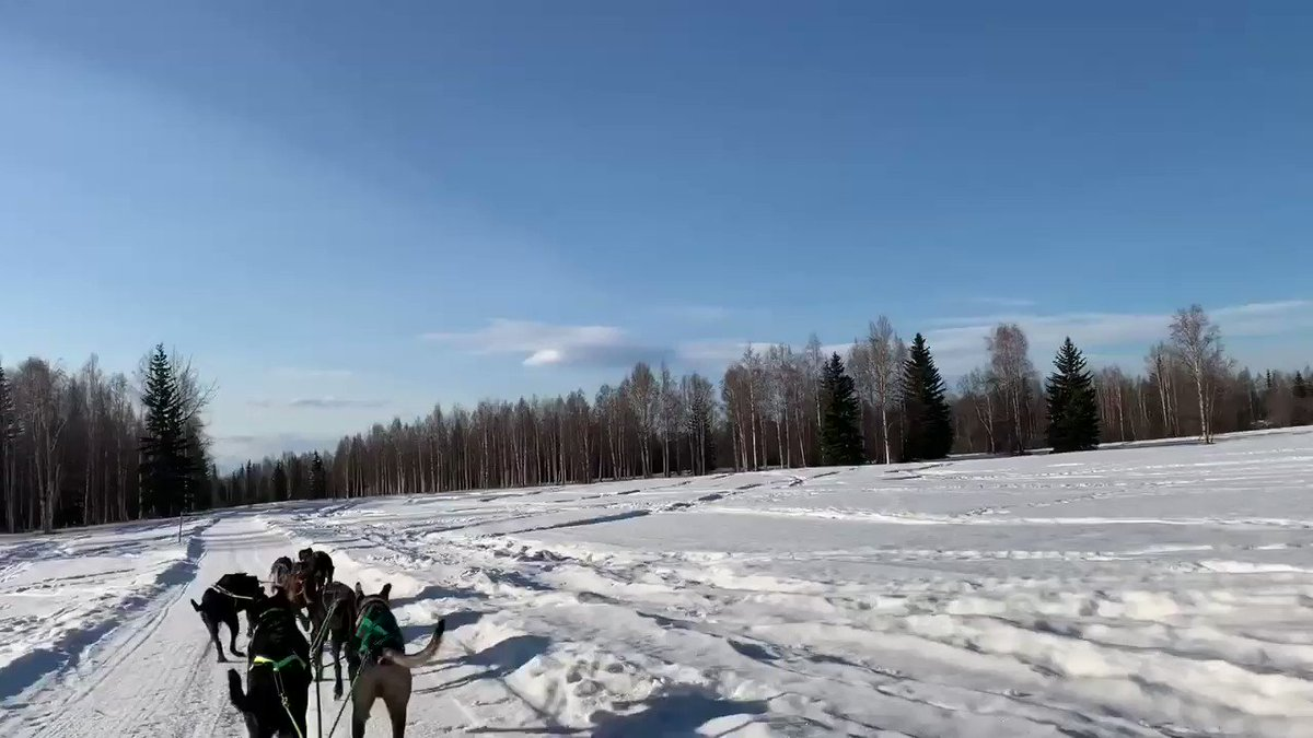 🐕🛷 #Fairbanks #フェアバンクス