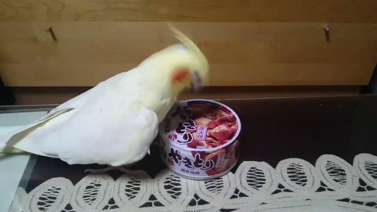 いいちこインコの飼い主@花沢りん吉's photo on #このタグを見た人は好きなやきとりを言う