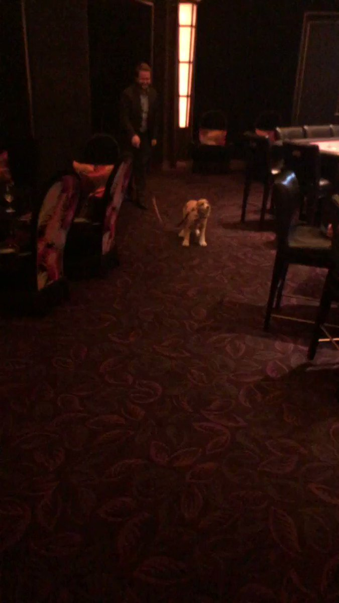 Most baller casino thing I have ever seen. When your casino host brings your dog to you, and walks your dog.