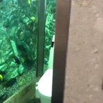 まるで水族館のよう!魚が自由に泳ぐトイレがある!