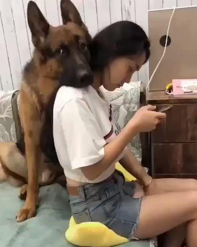 たってる間にクッションを濡らすイタズラしたら、犬さんが守ってた