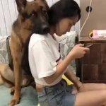 完全に守ってくれてる!かしこい犬だな~?かわいい!