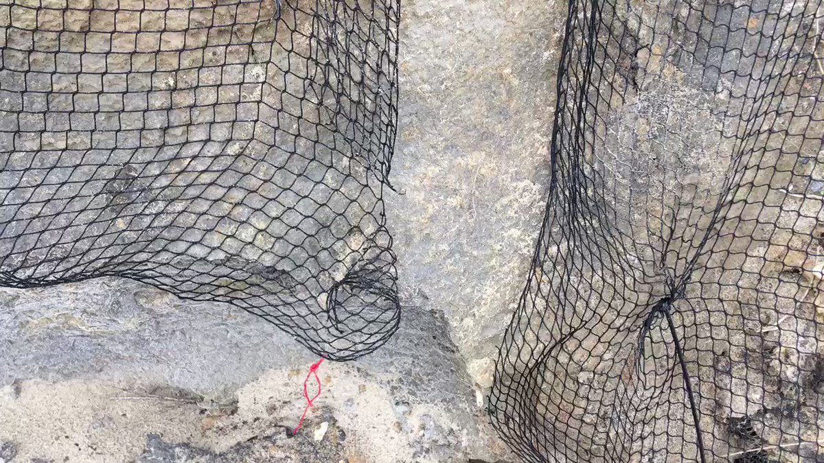 #CliffsofShame Who gets trapped in a net like that ? #Sandmartins prevented from nesting at #BactonSandscaping .⁦@MarkAvery⁩ ⁦@ChrisGPackham⁩ ⁦@IoloWilliams2⁩ ⁦@WildJustice_org⁩