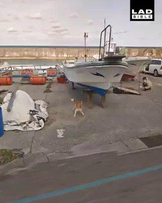 Google haritalar için çekim yapan aracın peşine takılan yaramaz..