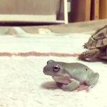 交渉の末、亀を乗り回すカエル