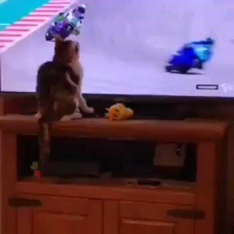 Bad cat! #SkySport #MotoGP #giornalaiallosport