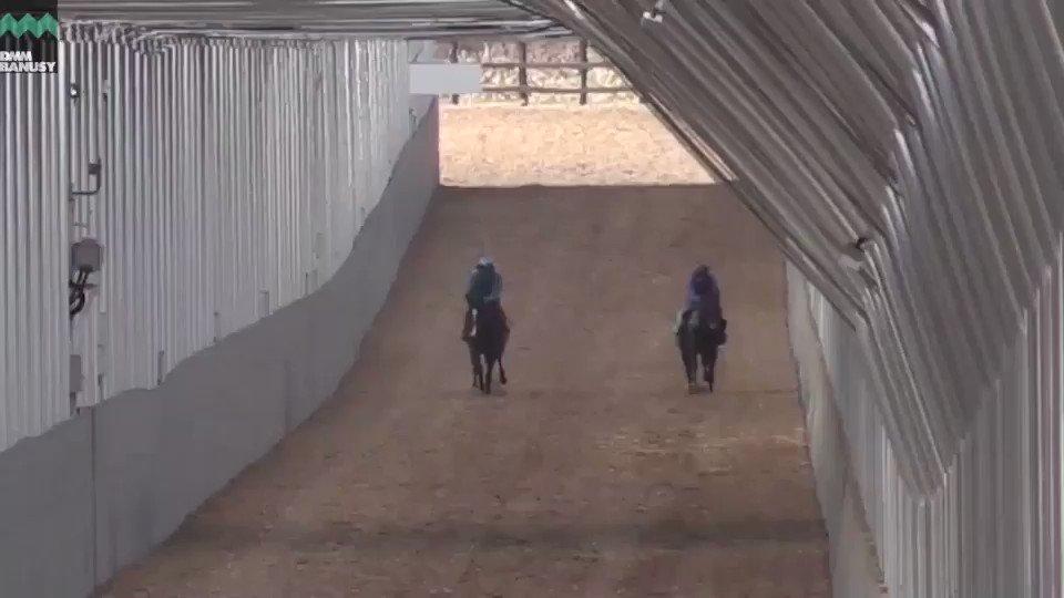 4月9日、屋内800m直線坂路での様子になります。 矢印の付いている馬が #アイワナトラスト になります。 ラスト3ハロン(約600m)のタイムは、 15.9秒、15.7秒、15.0秒となりました。  ▼本馬の詳細はこちら https://t.co/yNQFBnZzc3 #ジャスタウェイ産駒 #バヌーシー  #ワナダンス2017