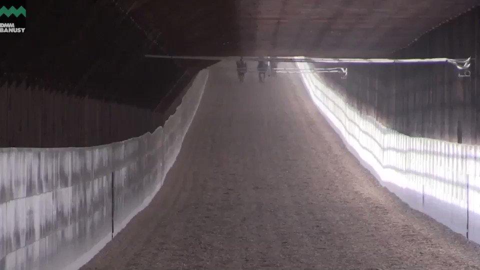 4月10日、屋内1020m直線坂路の様子です。矢印が付いている馬が #ゴールデンレシオ になります。 ラスト3ハロン(約600m)のタイムは 14.2秒、14.0秒、14.6秒となりました。  ▼本馬の詳細はこちら https://t.co/2vU7xRNoz0 #国枝栄 厩舎 #バヌーシー