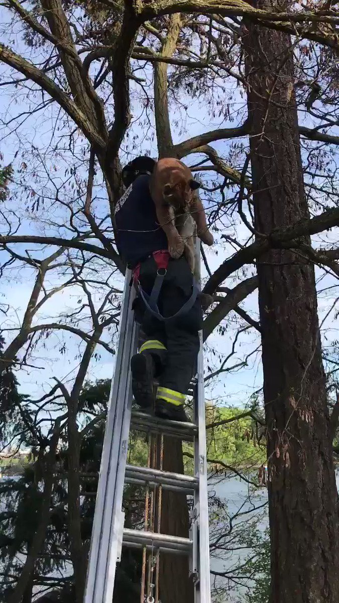 When they say firefighters rescue cats from trees, they're not kidding!