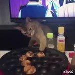 猫のたこ焼き屋さん!?上手にたこ焼きをひっくり返す猫が現る!