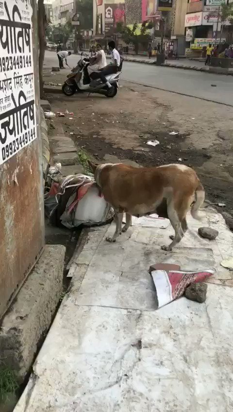 THINK BEFORE U BUY: Ravi Rao an #Alert #citizen has taken this #VIDEO of a stray #dogs #licking #ICE kept for #Sale at an ice stall on Laxmi Bhavan Square WHC road #Nagpur  #VideoViral  @timesofindia  @TOI_Nagpur  @TOIIndiaNews  @TimesNow  @SunilWarrier1  @wordsmith01  @icecube
