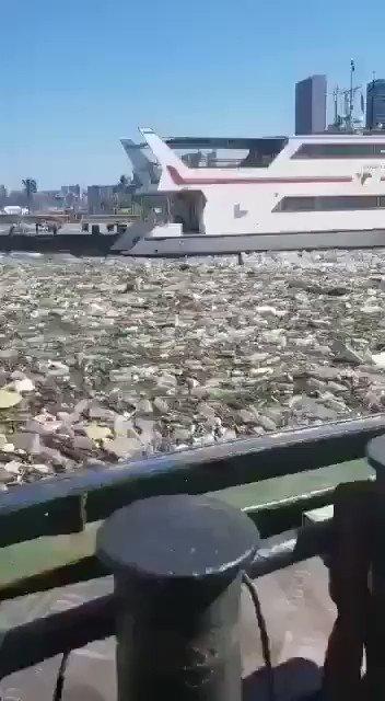 RT @webcamsdemexico: ¡Lamentable! 😔😔😔  Durban harbour, South Africa  Video: @crimeairnetwork. Vía: @pep_vilamala. https://t.co/KhG8rT3LSA