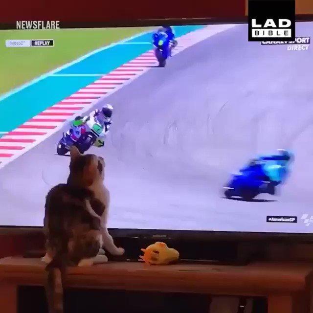 猫パンチのせい