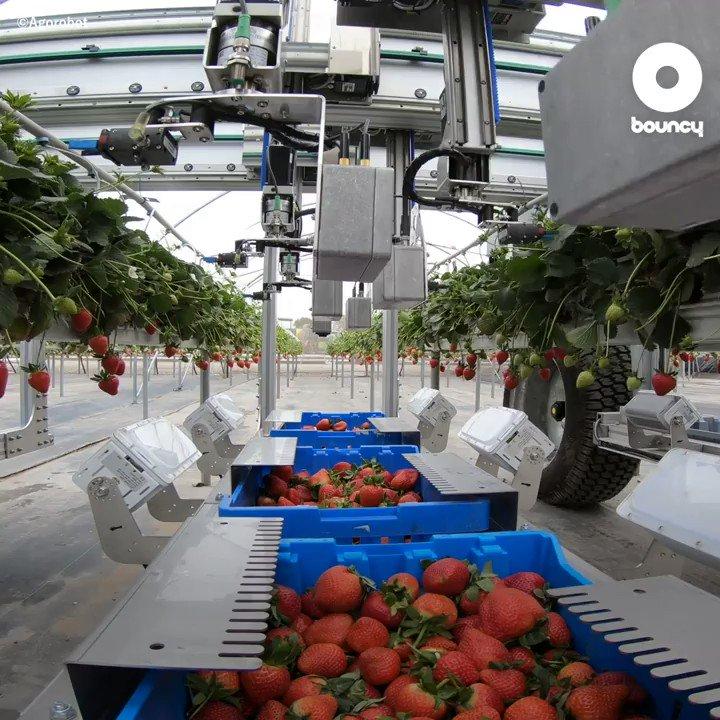 1月15日は🍓 #いちごの日 🍓美味しい苺をたくさん食べたいな♬🍓