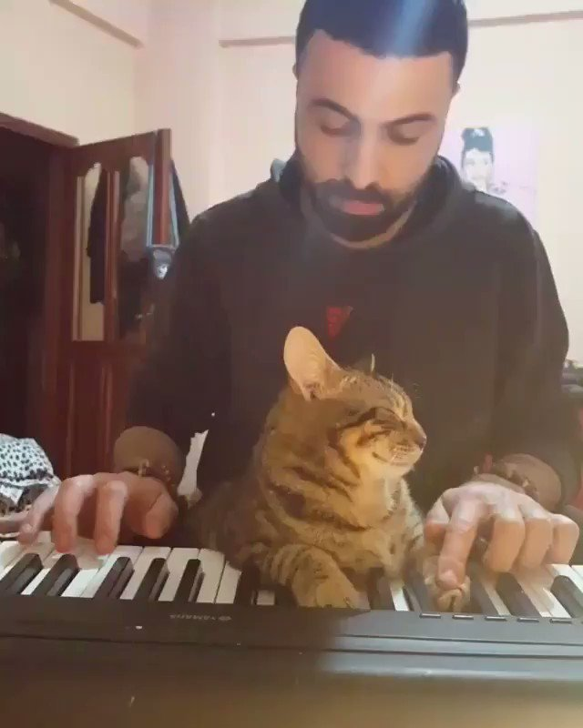 It's not easy being a pianist cat. He works very hard. And when he tired of playing the piano.... 🎹😺🐈🎶