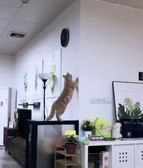 運動神経が悪すぎる猫