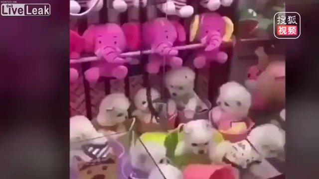 犬 クレーン ゲーム 中国