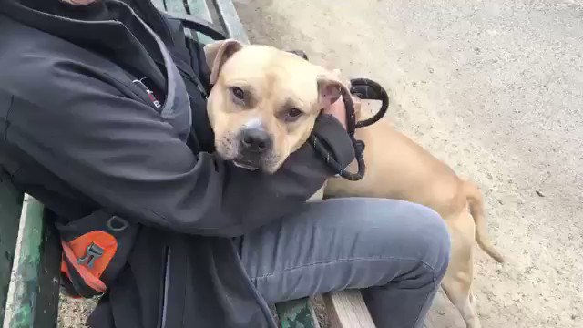 SOMEONE WILL GET A GREAT DOG IN ACE. UNLESS THE @NYCACC KILLS HIM THURSDAY. Great with people, patient, loving, likes dogs. Why will we kill him? Ace needs your pledges via @chortletown to attract a Rescue or Foster/Adopter. ID #61025. PLEASE RT ACE! https://www.facebook.com/mldsavingnycdogs/photos/to-be-killed-51619super-sweet-social-friendly-bouncy-boy-a-happy-smile-a-warm-an/976290952557175/…