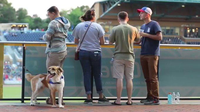 Doggies Photo