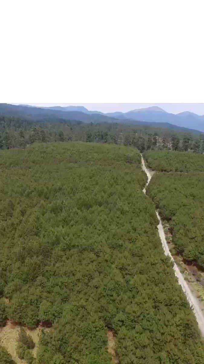 Para mejorar las condiciones de nuestro medio ambiente, reforzaremos la campaña de reforestación 2019 en el #Edoméx.