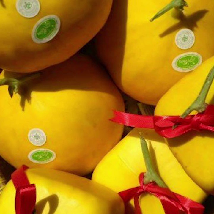 MELON UNIK DARI JAWA TIMUR BERBENTUK KOTAK DAN HATIOleh pembudidaya, buah unik itu diberi nama Melon Varietas Golden Langkawi Prima. Melon unik tersebut dikembangkan Dinas Pertanian Jawa Timur di Puspa Lebo, Kecamatan/Kabupaten Sidoarjo. #NewsOne #ViralNews