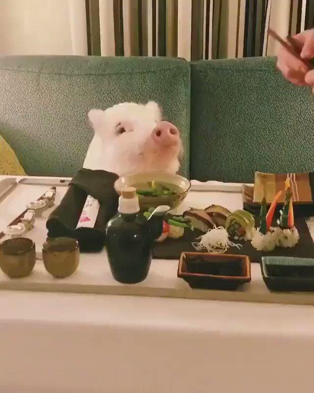 La única manera de tener cerdo para cenar... es invitándole a sushi vegano 😍😍😍 🐷  Vía Christopher the Pig