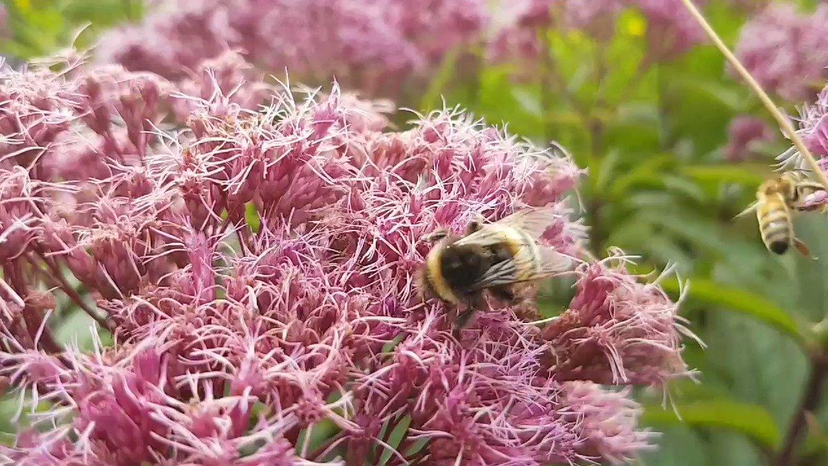 Chris Howell's photo on #gardenersworld