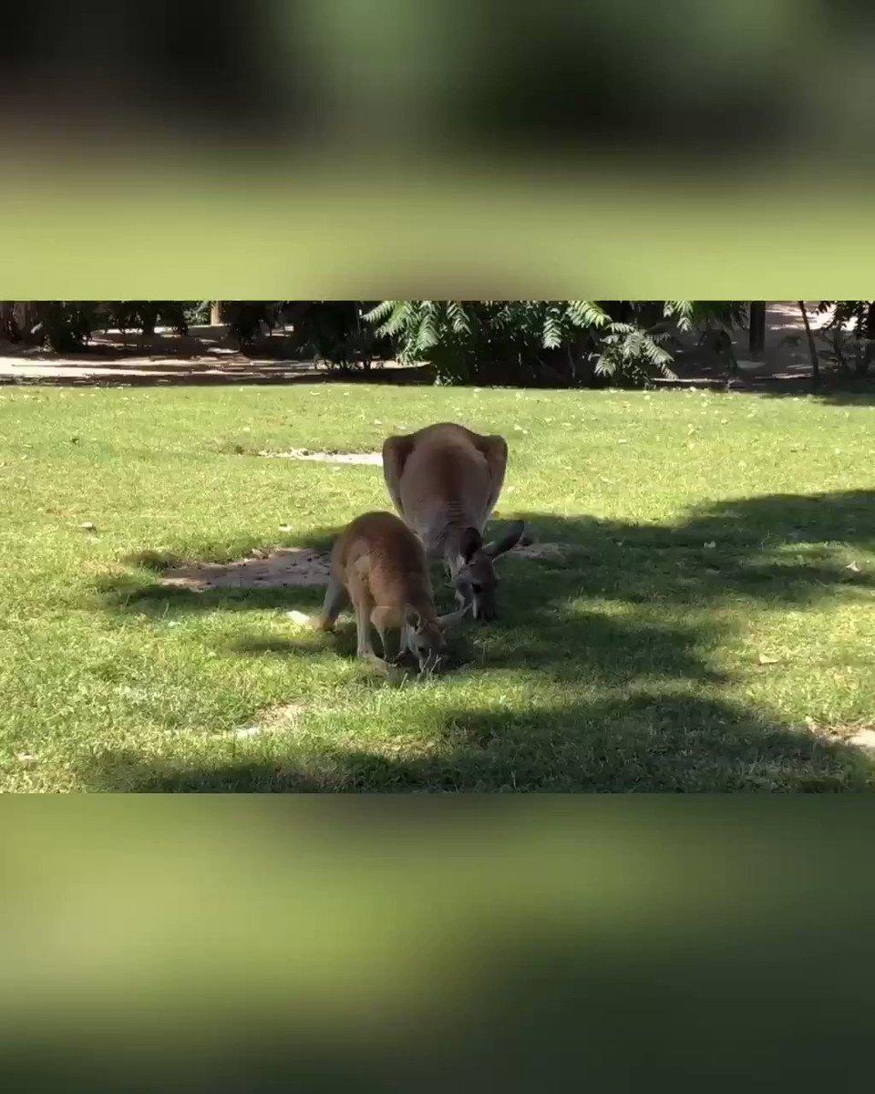 Wildlife World Zoo, Aquarium & Safari Park's photo on #SaturdayMorning